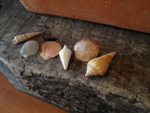 !shells